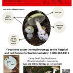 Advisory: Death Cap Mushrooms